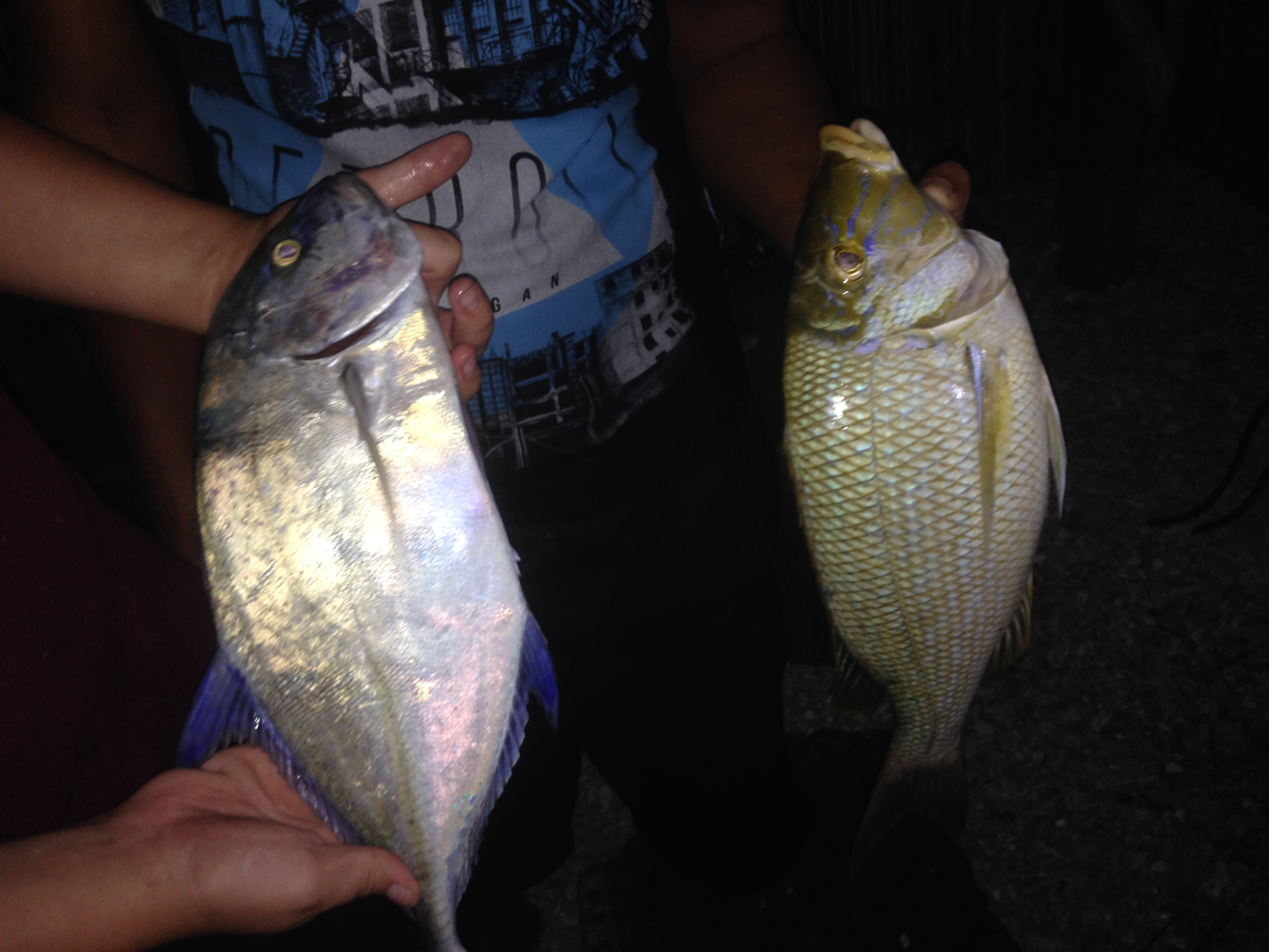 Trevally and Whitesnaper that boys and Mark caught for dinner